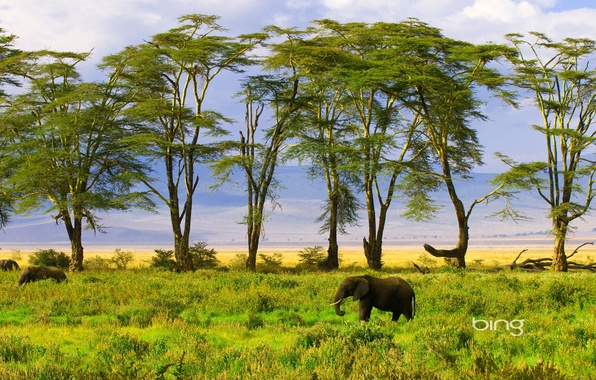 Картинка зелень, природа, слон