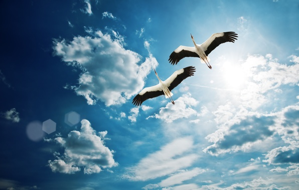 Картинка небо, облака, птицы, красивая, sky, beautiful, clouds, birds, fly, летать, Heron
