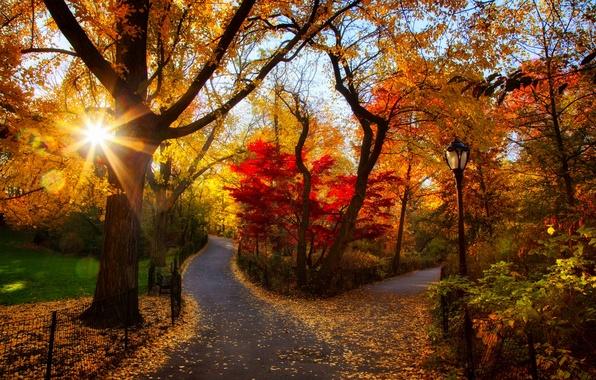 Картинка дорога, осень, лес, листья, деревья, закат, природа, парк, colors, colorful, forest, road, trees, nature, sunset, …