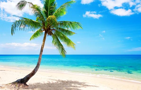 Картинка песок, море, пляж, солнце, тропики, океан, берег, остров, summer, beach, sea, ocean, coast, blue, sand, …