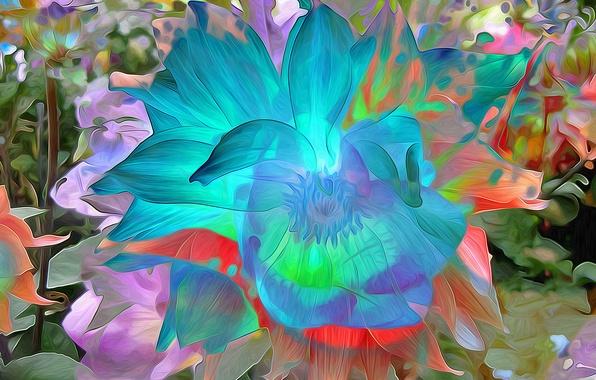 Картинка цветок, макро, природа, парк, лепестки, сад, клумба