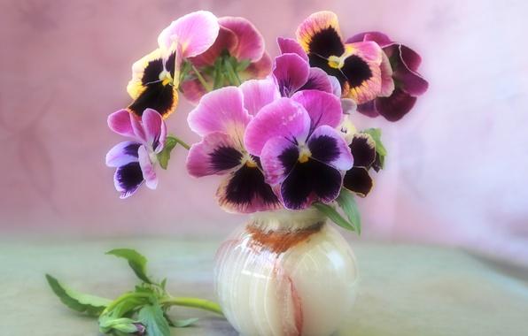 Цветы натюрморт ваза букет фиалки