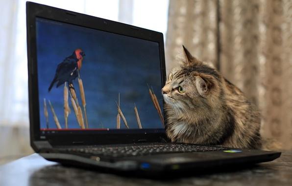 Картинка кошка, фон, ноутбук