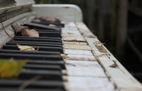 Картинка осень, листья, макро, фото, клавиши, сломанное, старое, пианино, музыкальный инструмент