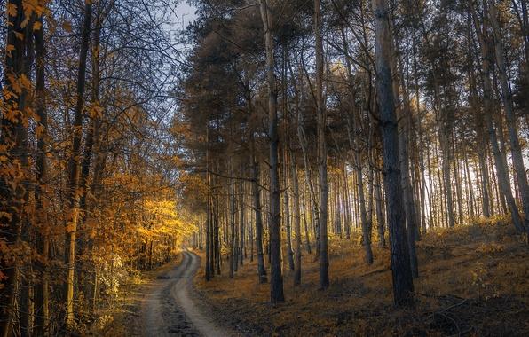 Картинка дорога, осень, лес, листья, деревья, закат, желтые