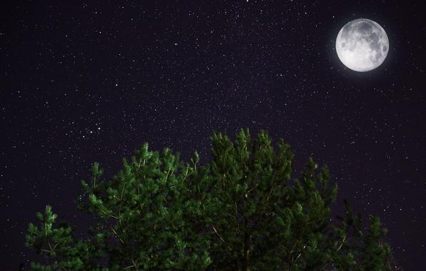 Картинка космос, звезды, ночь, луна, сосна