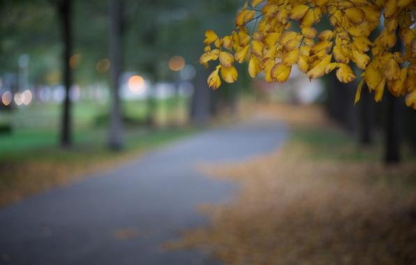 Картинка осень, листья, макро, город, блики, парк, дерево, вечер, желтые, размытость, Чикаго, США, Иллинойс