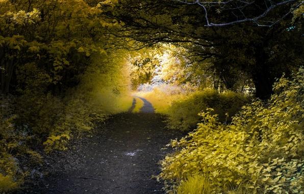 Картинка дорога, лес, природа, цвет