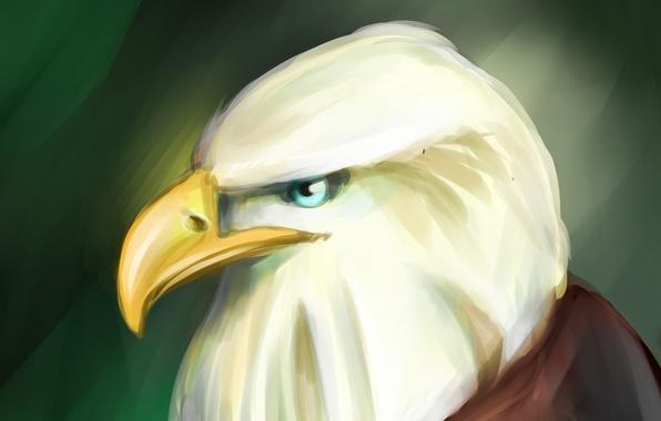 Картинка орел, арт, art, eagle