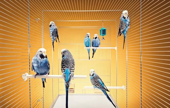 Самые красивые попугаи Топ28