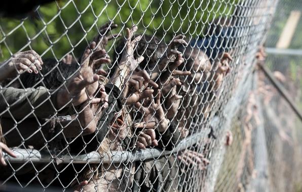 Картинка zombies, hands, the walking dead, season 4, wiring