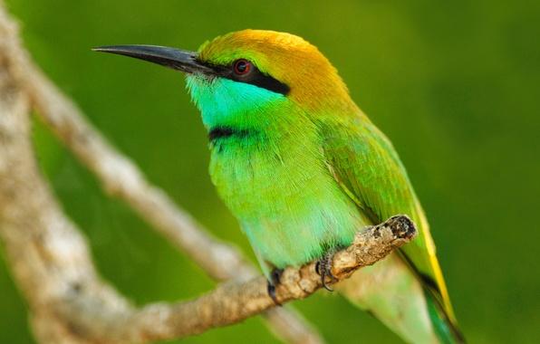 Картинка животные, листья, макро, природа, птица, ветка, animals, оперение
