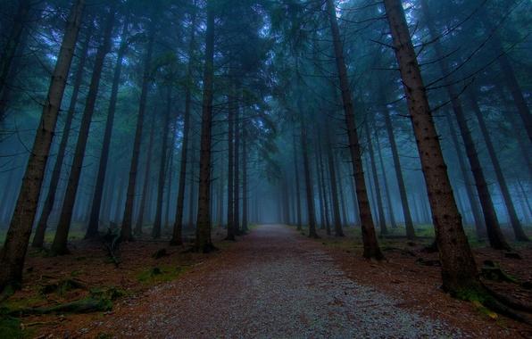 Картинка лес, деревья, природа, путь, дерево, дороги, вечер, аллея, тропинка, тропинки, аллеи, красивые дорога
