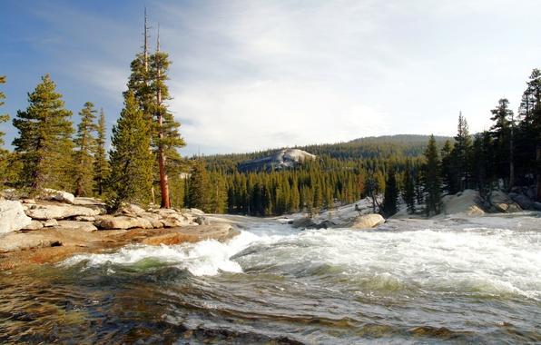 Картинка лес, деревья, река, камни, берег, течение, Калифорния, США, Национальный парк Йосемити, Yosemite National Park, бурный …