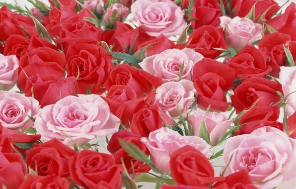 Красивые цветы обои