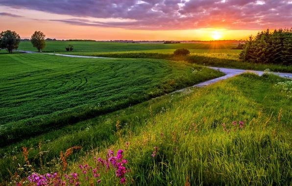 Картинка поле, небо, трава, солнце, закат, тучи, вечер, луг, grass, sky, field, sunset, clouds, evening, sun, ...