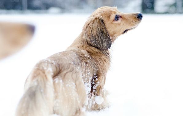 Картинка снег, собака, прогулка