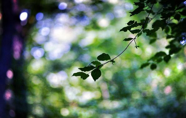 Картинка листья, макро, деревья, зеленый, веточка, фон, дерево, widescreen, обои, размытие, ветка, листик, wallpaper, листочек, широкоформатные, …