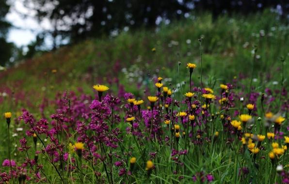 Фото обои Финляндия, полевые цветы, природа