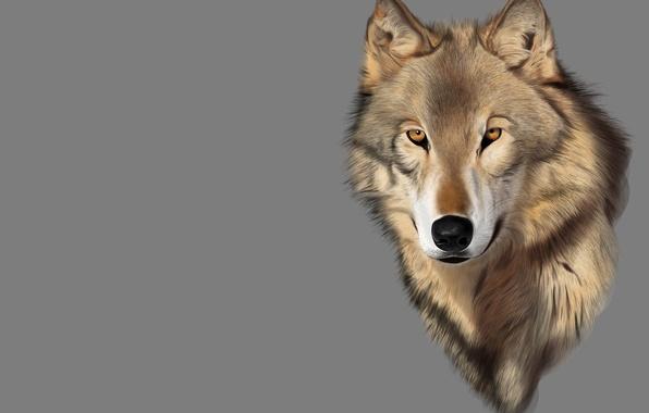 Картинка взгляд, рендеринг, настроение, волк, хищник, арт