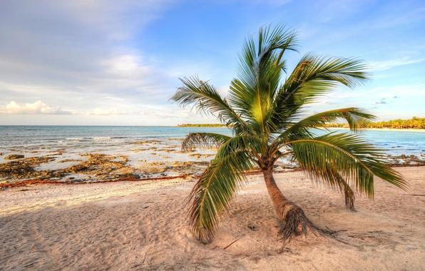 Картинка песок, море, небо, пальма, берег