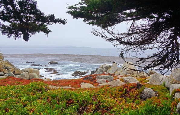 Картинка USA, Coast, California, Nature.