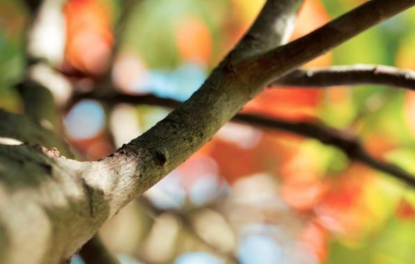 Картинка макро, фон, дерево, widescreen, обои, ветка, размытость, wallpaper, широкоформатные, background, macro, tree, боке, полноэкранные, HD …