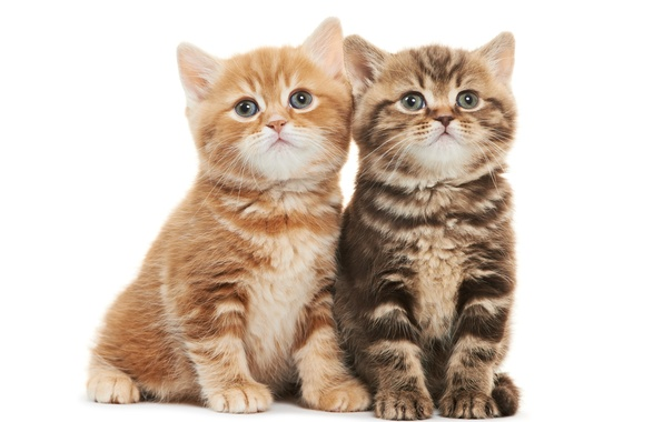 Картинка котята, малыши, дуэт