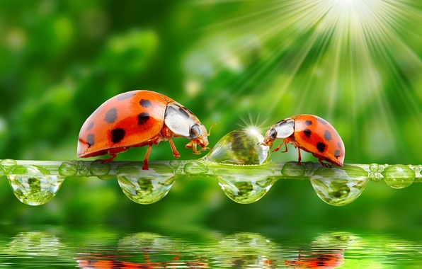 Картинка зелень, вода, капли, природа, лучи солнца, божьи коровки, травинка