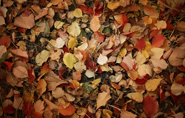 Картинка листья, ветки, земля, Осень