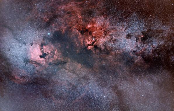 Картинка космос, звёзды, Туманность Пеликан, созвездие, мироздание