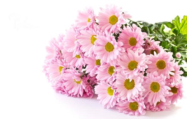 Открытка с хризантемами с днём рождения