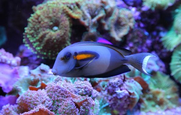 Картинка море, рыбы, синий, океан, красивая, подводный мир, underwater, sea, ocean, blue, beautiful, fish, коралловый риф, …