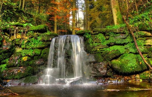 Картинка лес, деревья, пейзаж, природа, ручей, камни, водопад, мох