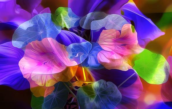 Картинка листья, цветы, природа, лепестки, сад, клумба