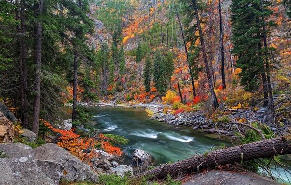 Картинка осень, лес, деревья, река, камни, склон