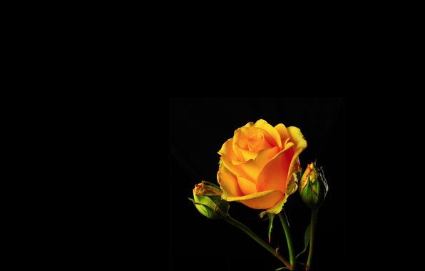 ... бутон, лепестки, свет, фон, тень, роза: goodfon.ru/wallpaper/roza-lepestki-buton-svet-ten.html