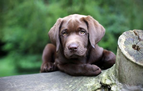 Картинка взгляд, фон, друг, собака
