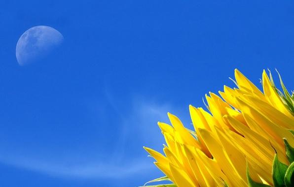 Картинка цветок, небо, жёлтый