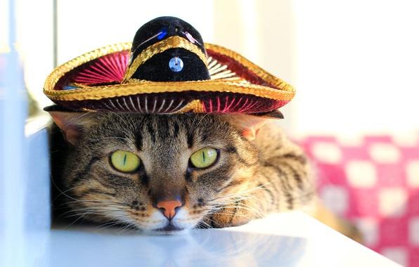 Картинка глаза, кот, усы, шляпа, лапы, размытость, мордочка, зеленые, хвост, окрас, полосатый, смотрит, cat, котяра, боке, ...