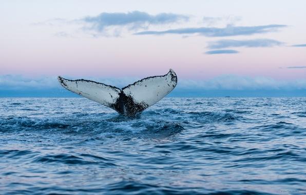 Картинка море, природа, кит