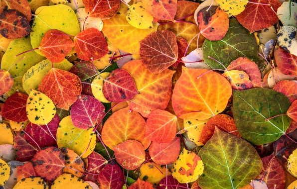 Фото обои осень, краски, листва, макро