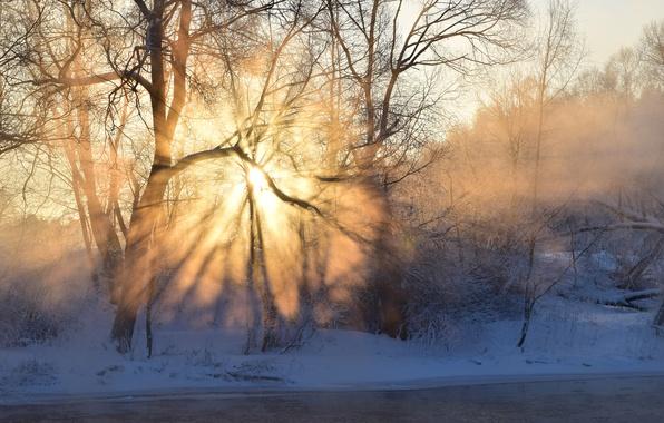 Картинка иней, лес, небо, солнце, лучи, свет, снег, деревья, туман, река, восход, Зима, тень, утро, мороз