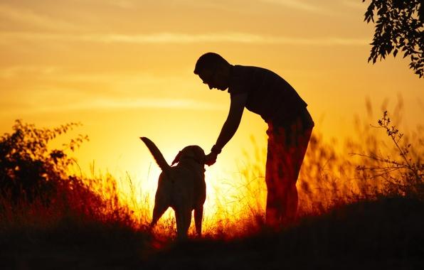 Картинка свет, природа, друг, собака, Парень