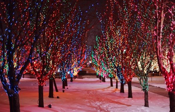 Картинка зима, дорога, снег, деревья, ночь, ветки, следы, природа, огни, огоньки, гирлянда, аллея, разноцветные, праздники