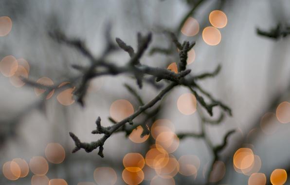 Картинка огни, ветка, Christmas double