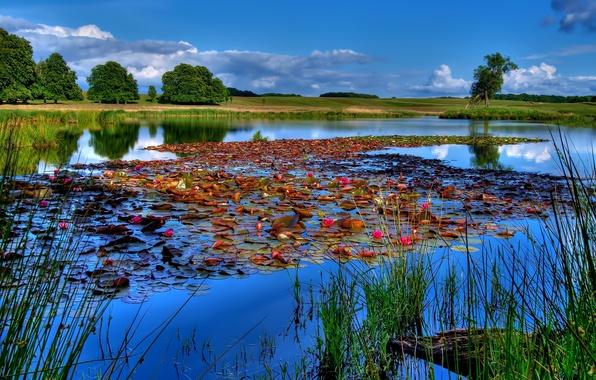 Картинка небо, вода, пейзаж, озеро, река, лилии, рыбалка
