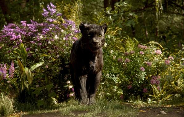 Картинка пантера, Багира, The Jungle Book, Книга джунглей