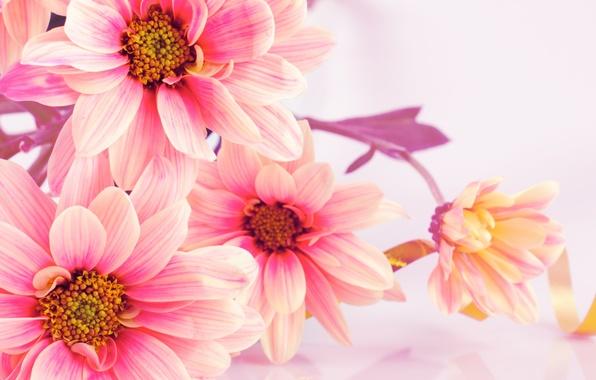 Картинка цветы, букет, хризантемы