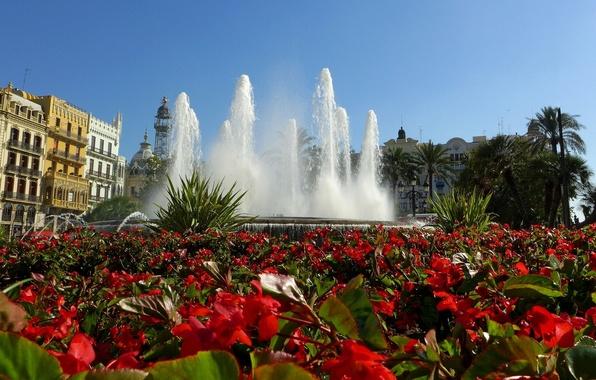 Картинка цветы, фонтан, Испания, клумба, Spain, Valencia, Валенсия, бегонии
